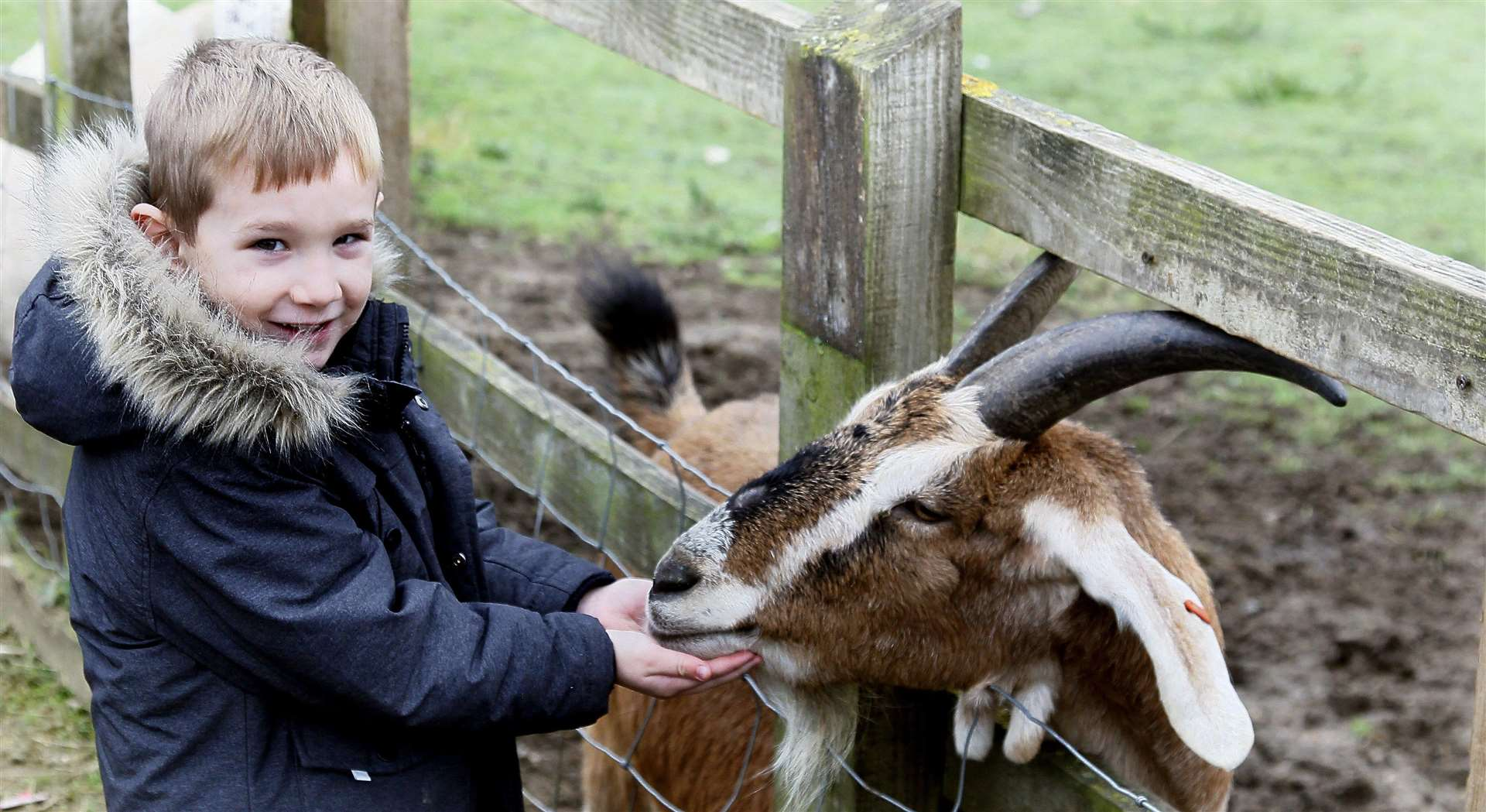 Wrap up warm and meet the animals at Kent Life