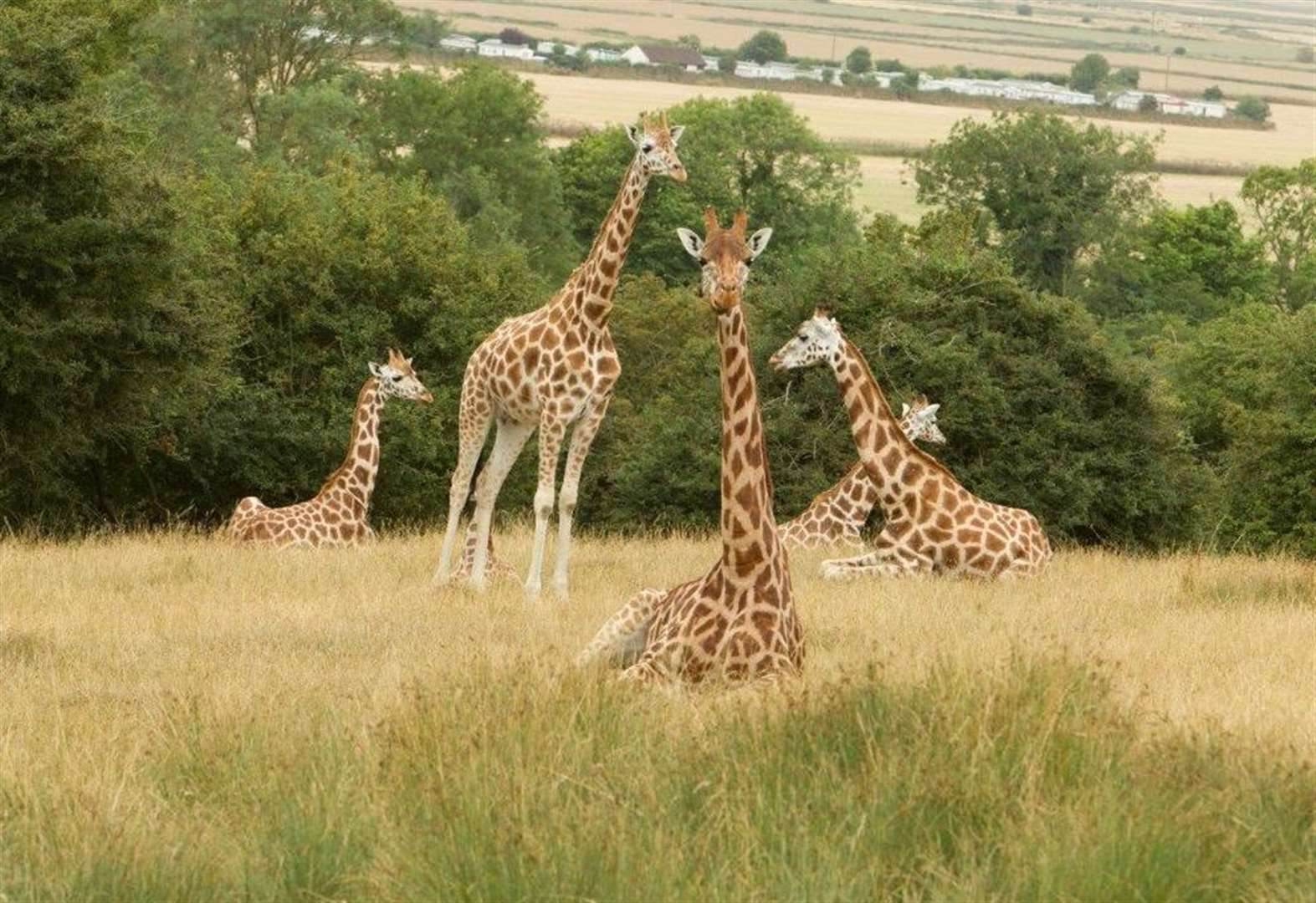 Win an overnight stay at Port Lympne