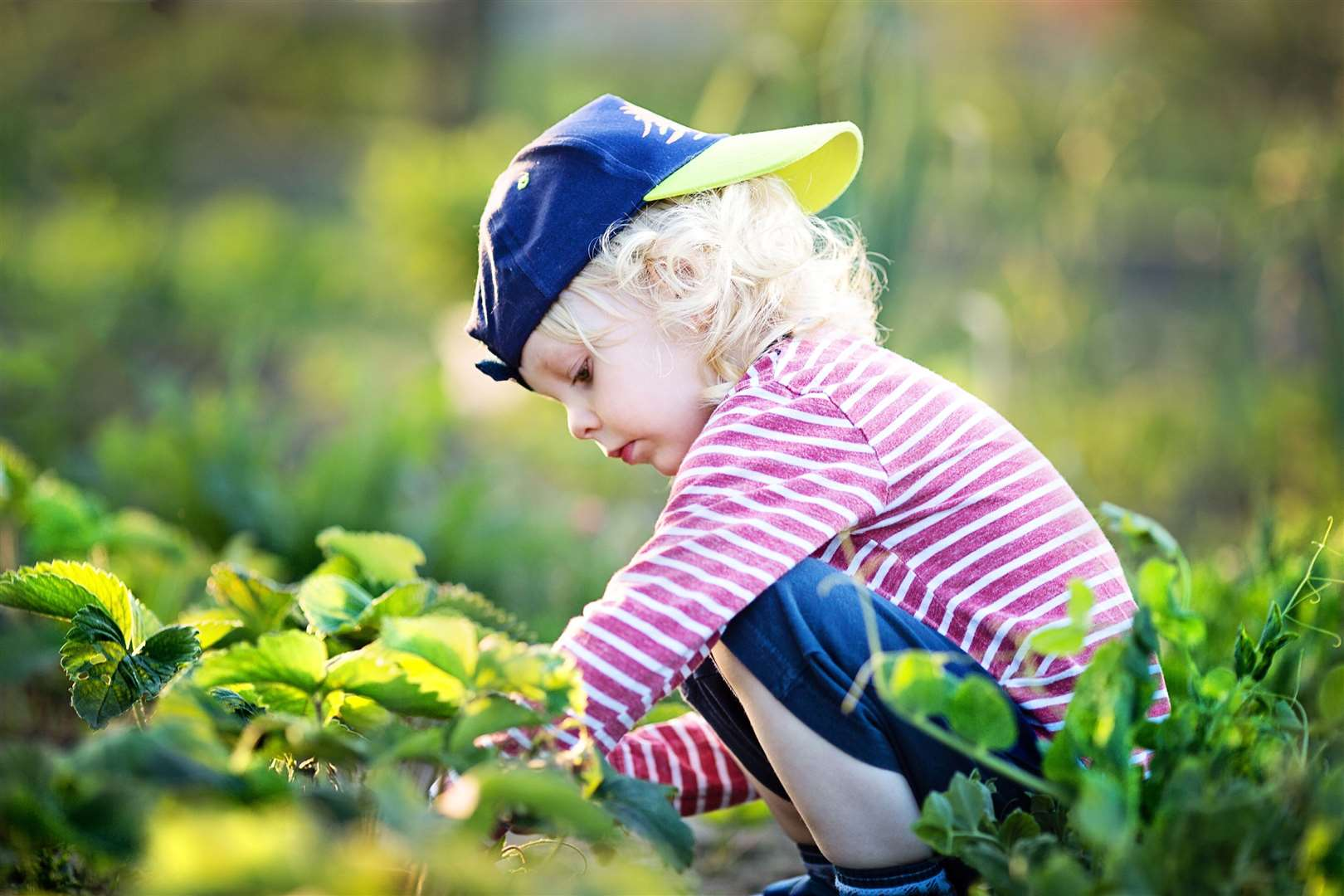 Children are more likely to try veg when they've grown it themselves