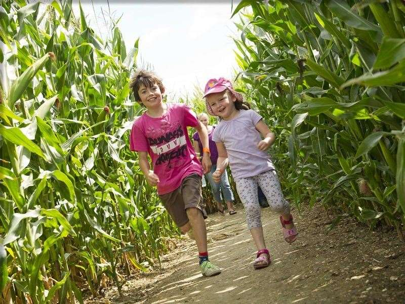 Outdoor mazes are popular outings in summer time
