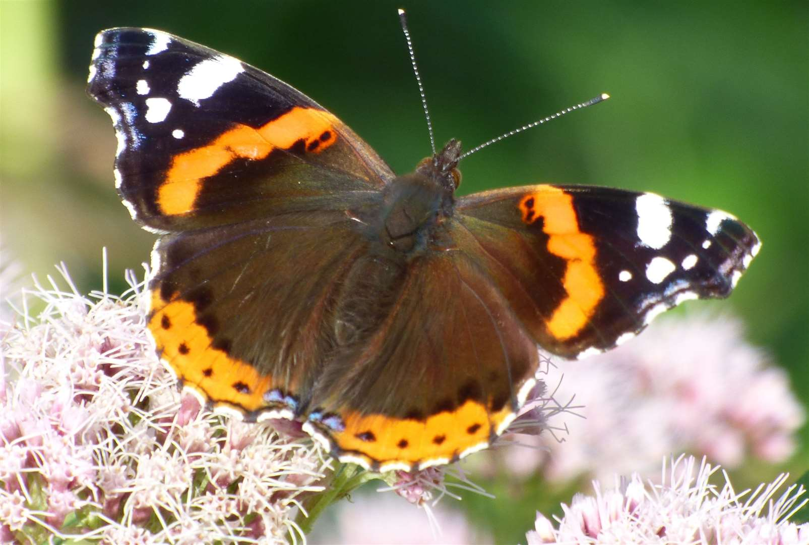See the butterflies at Millbrook