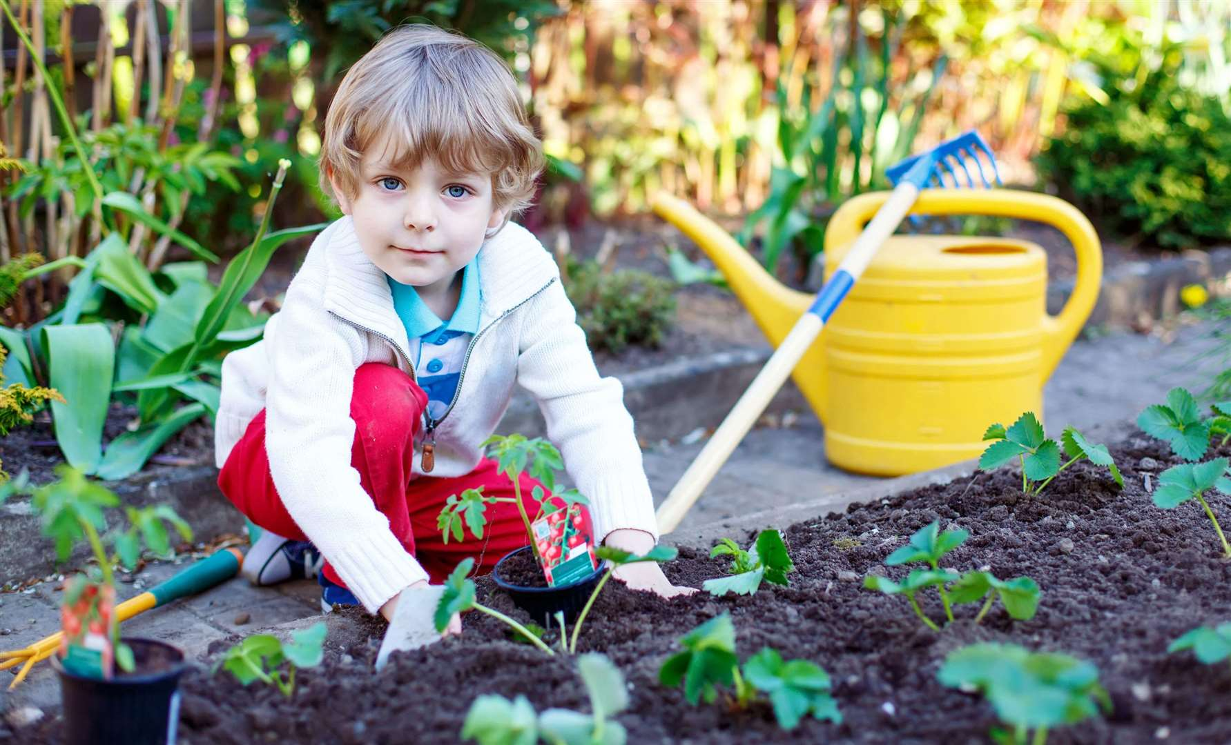 Let the kids have their own space in your vegetable bed, garden or allotment