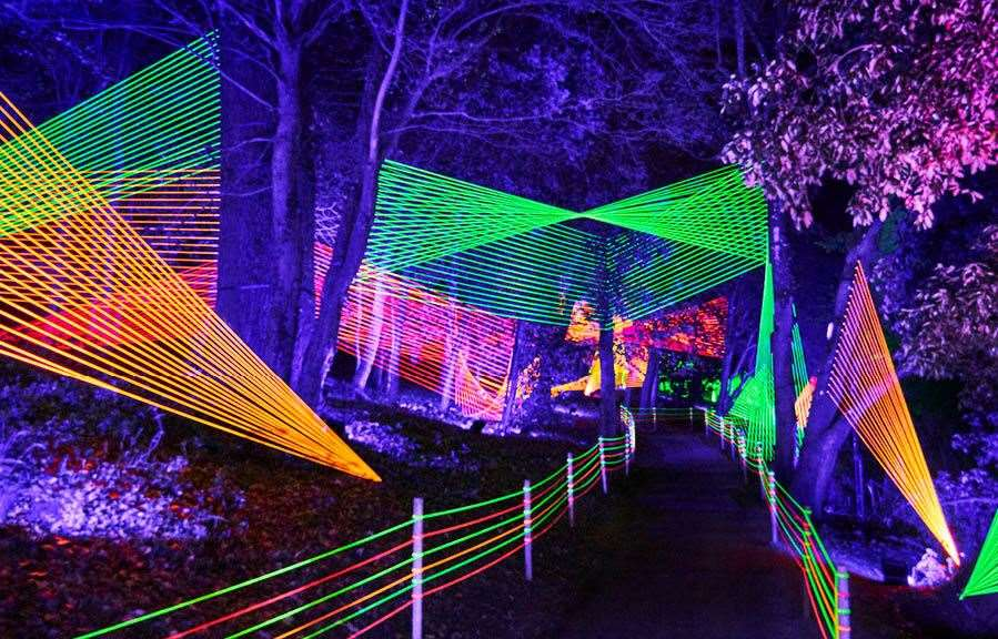 Christmas at Bedgebury features an illuminated trail