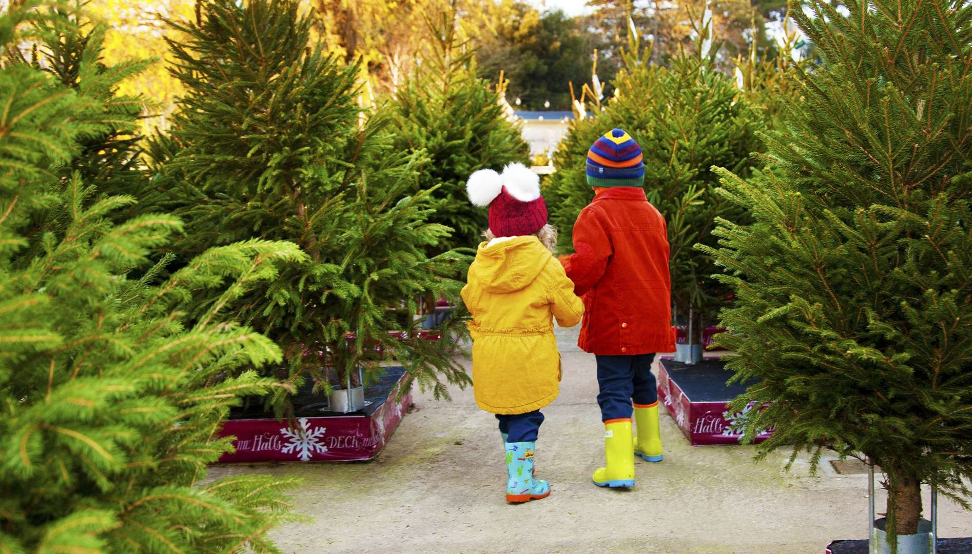This Saturday and Sunday is predicted to be a popular time for finding a real Christmas tree