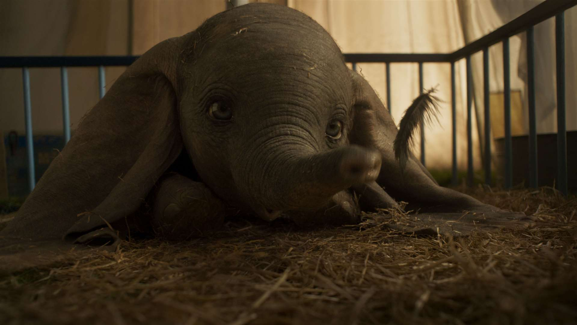 Tickets for Dumbo are now on sale for Kent screenings. Picture: ©2018 Disney Enterprises, Inc. All Rights Reserved.