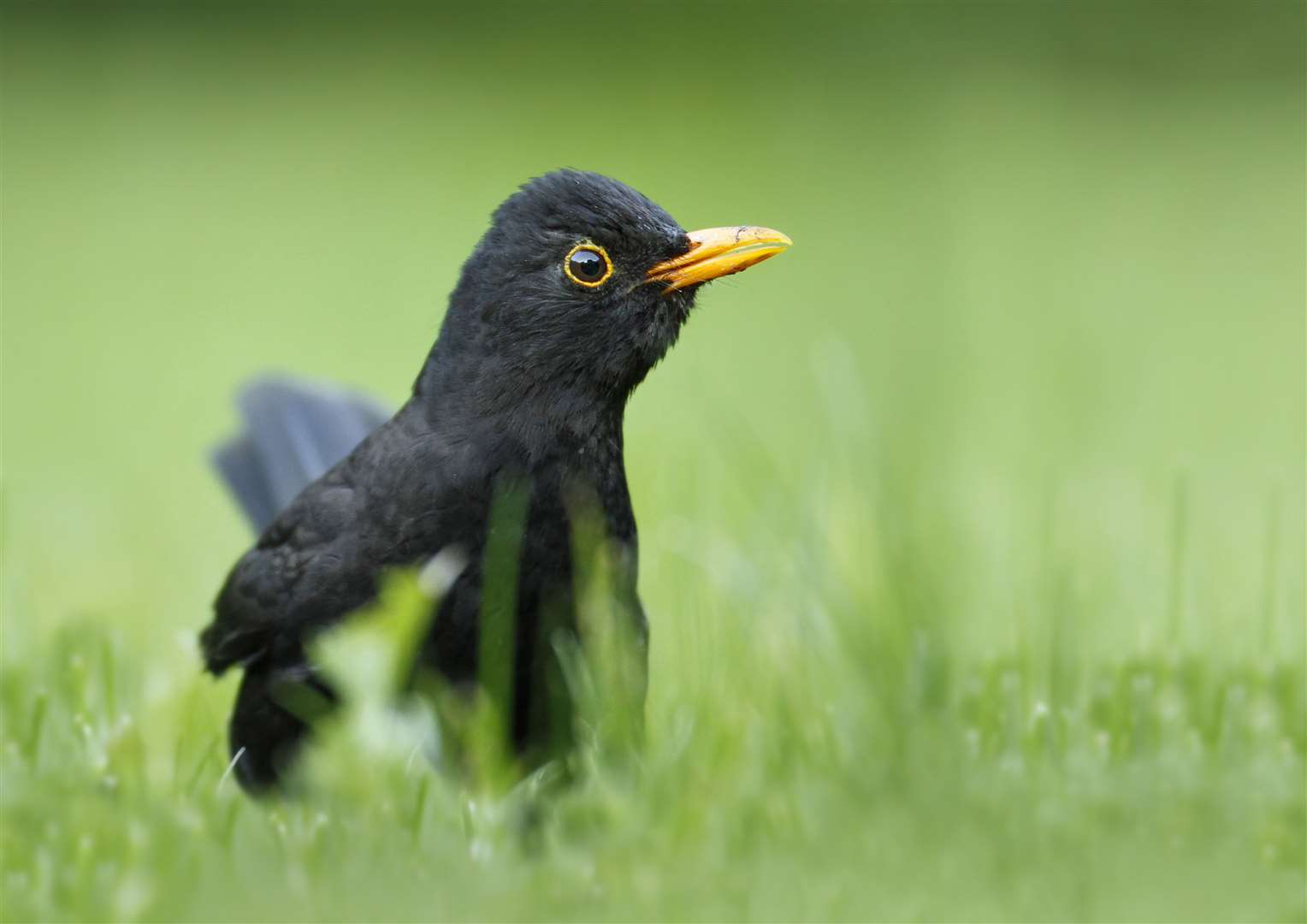 You might see birds like blackbirds Picture: Jon Hawkins Surrey Hill Photography