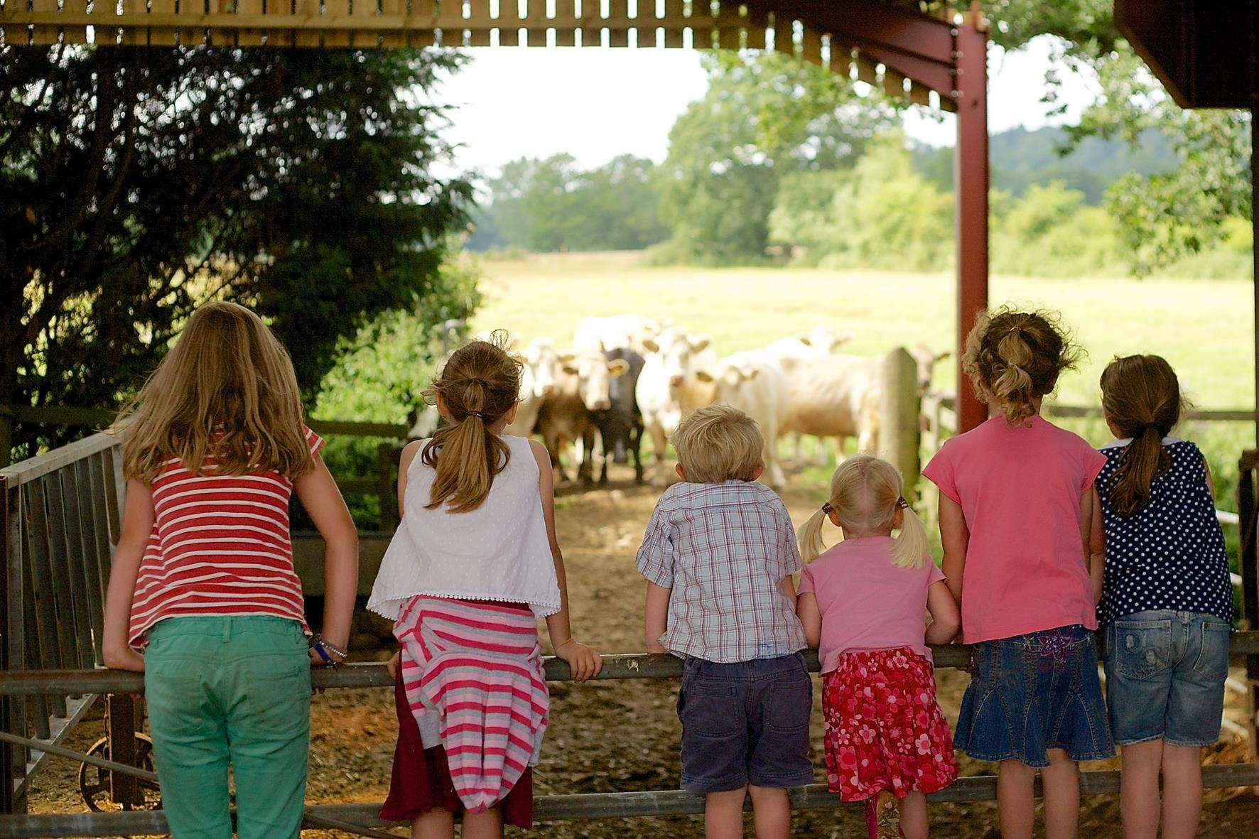 Learn more about life on a farm during Open Farm Sunday
